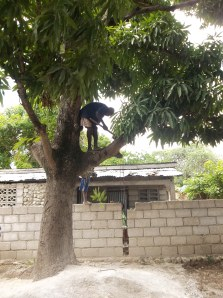 Chopping down a branch from the mango tree to make space for the basketball court.